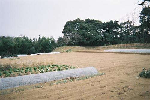 kanasugi-02