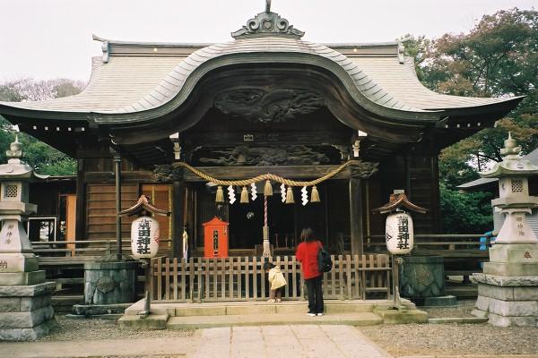 miyama-kikuta0
