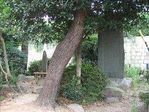 Senpyoumatsu