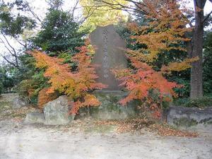 shiinoki1