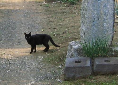 手賀城址にいた黒猫